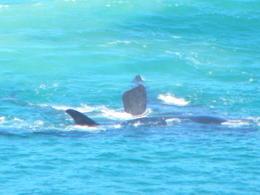 Whales!! , SIOBHAN P - November 2011