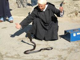 This guy charmed this cobra. I thought he would get stung for sure but he knew his stuff., James A - February 2008