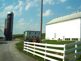 Amish Farm , Sheri - March 2011