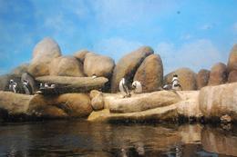Penguins - August 2009