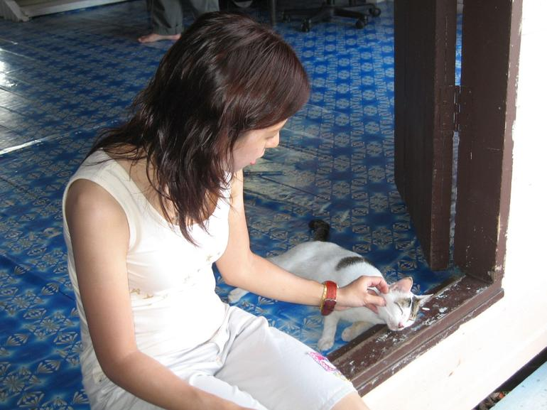 Playing with the Cat - Kota Kinabalu