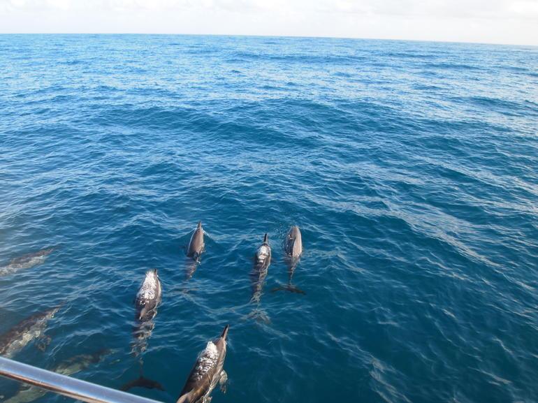 Spinner Dolphins - Kauai