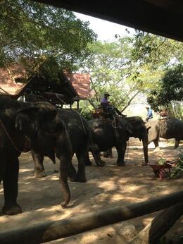 Elephant waiting for us to start the trip , jarodi - February 2013