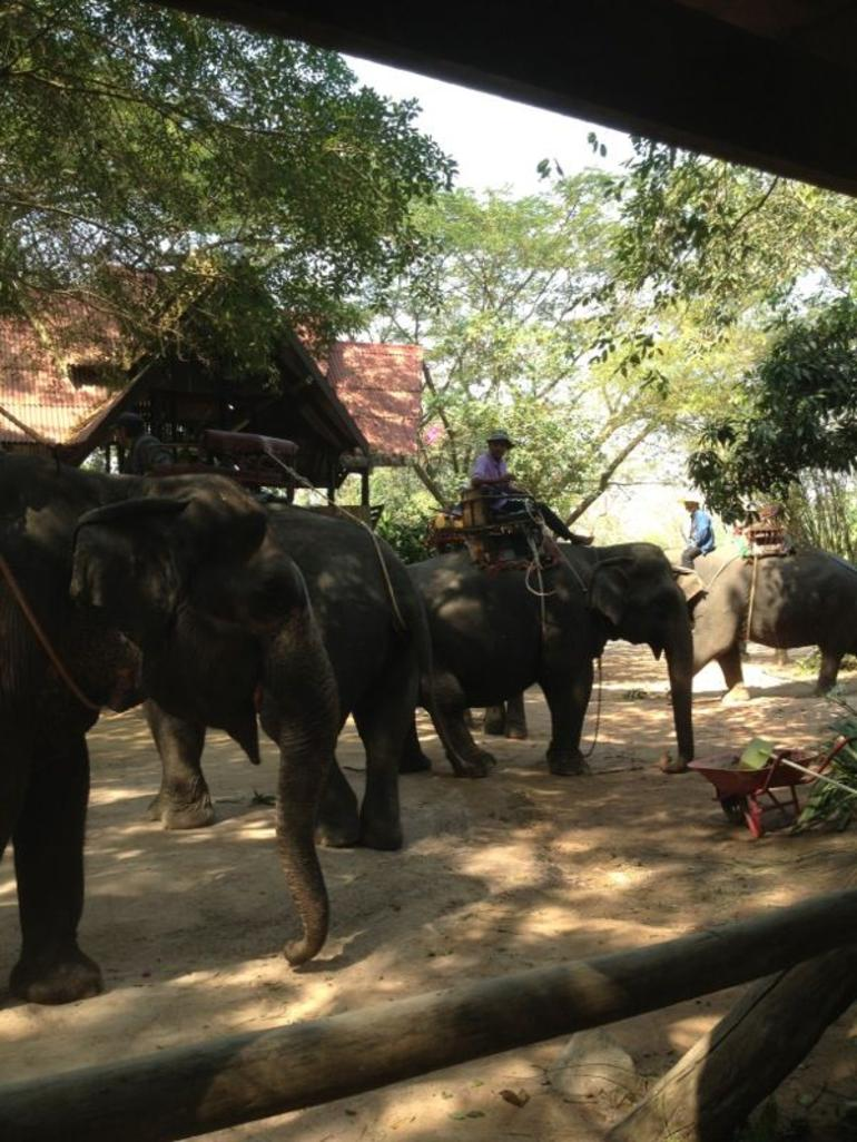 The Elephant is waiting - Pattaya