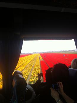 Taking photos and the tulip field slide past the coach windows! It was nice sitting on a coach higher up - good perspective over the fields!, Dominique - September 2011
