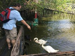 My husband feeding swans. , Scott S - August 2017
