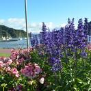 Shore Excursion: Highlights of Marlborough Wine Region from Picton, Blenheim, NUEVA ZELANDIA