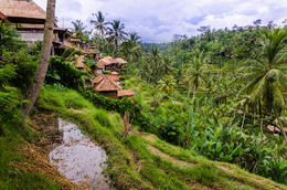 Bali Rice Field , salmorej - December 2013