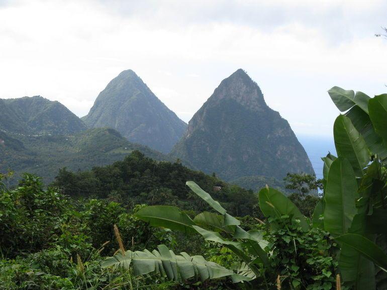 Rainforest Walk - St Lucia
