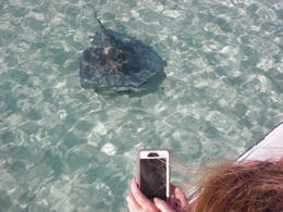 Sting rays headed to our boat right when we arrived! , Glenn W - December 2016