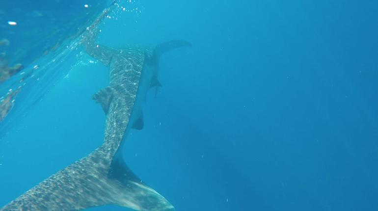 Whale Sharks tour in Cancun & Riviera Maya: Small-Group Eco Friendly photo 10