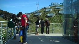 Living roof, Cal Academy of Sciences: Revolutionary design meets educational value., Chris W - July 2011