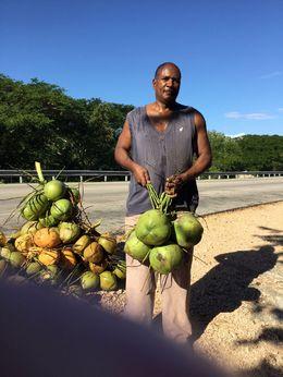 Stopped for fresh coconut... , Deborah B - January 2016