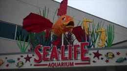 Explore the Sea Life Aquariam– part of San Diego's Legoland! - July 2011