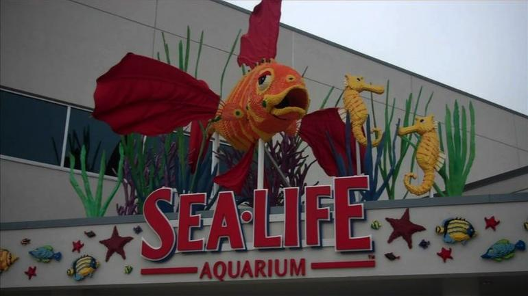 Sea Life Aquariam, San Diego - San Diego