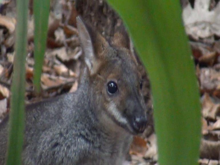 WILDLIFE SYDNEY - Sydney