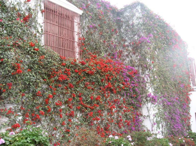 Flowers - Lima