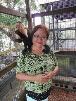 The monkeys are clean @ Mayan Jungle , jean.tea - February 2015