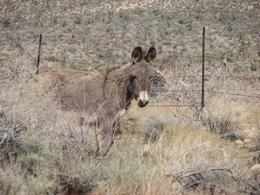Seen on the way out of Spring Mountain Ranch., James T - March 2009