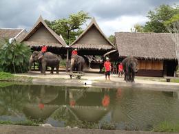 Rose Garden Elephant Show , Yelena - October 2012