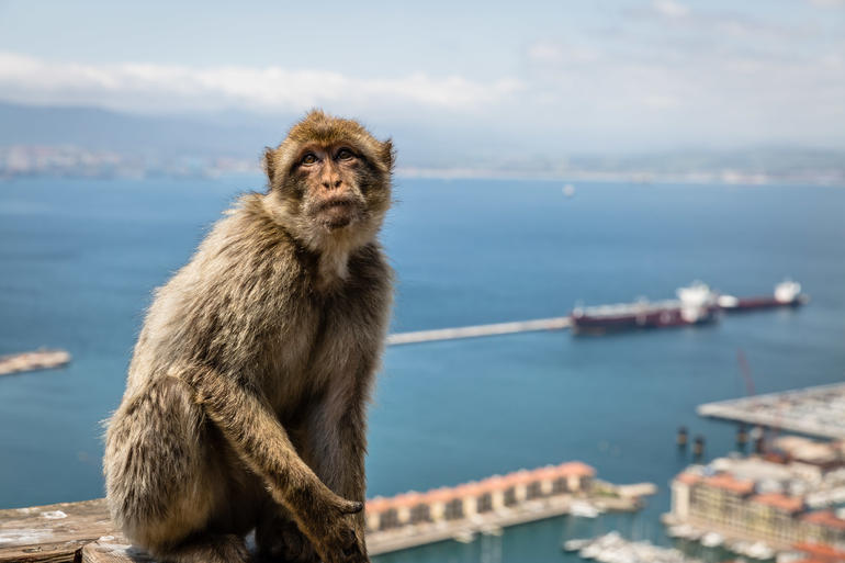 Gibraltar Express - Sightseeing Full Day- From Malaga photo 19