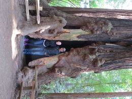 Loving the massive tree holes in muir woods! , Melody P - May 2015