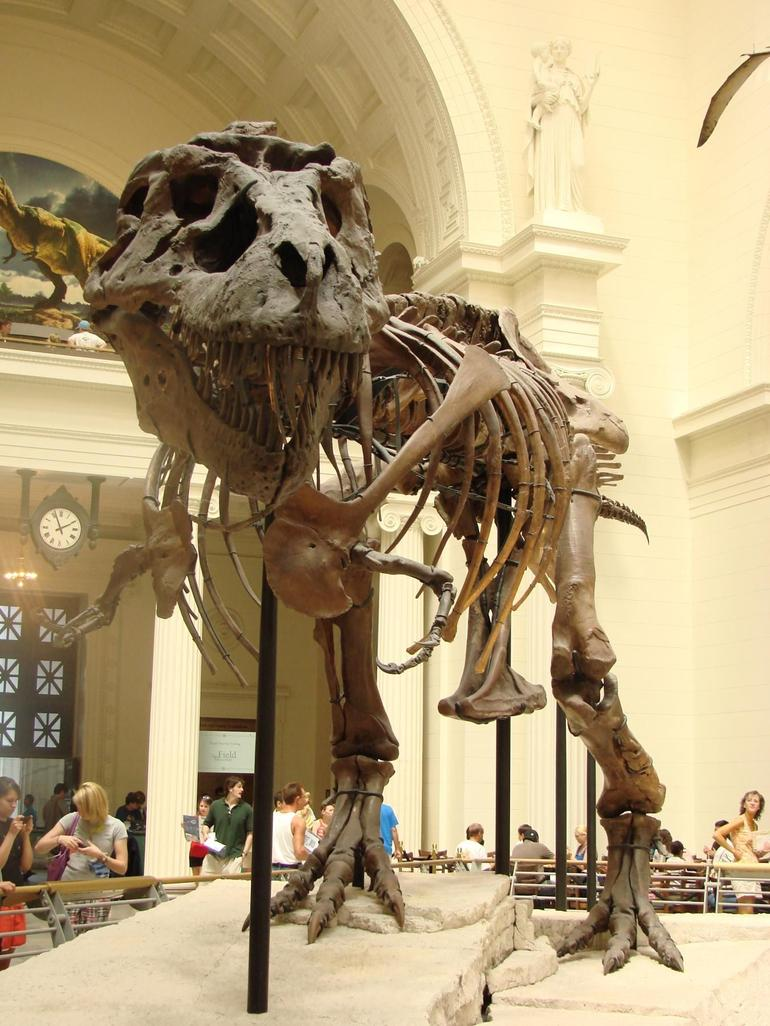 Sue the T-Rex (largest one found to date) - Chicago