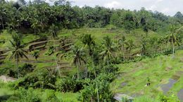 We saw the famous Balinese rice paddies on our tour. , Johann P - August 2016
