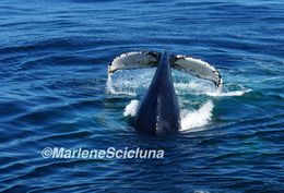 Whales got really close to us! , Marlene S - October 2015