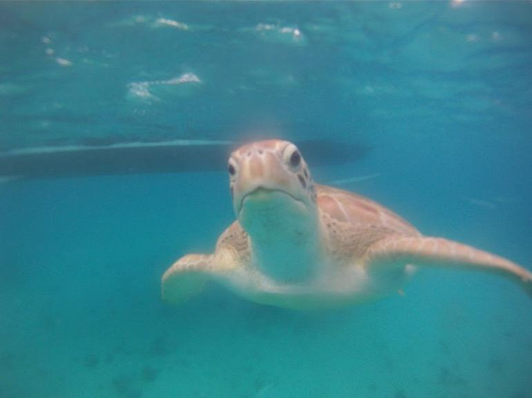 "Barbados ""Shared"" Turtle Swim and Shipwreck Tour photo 13"