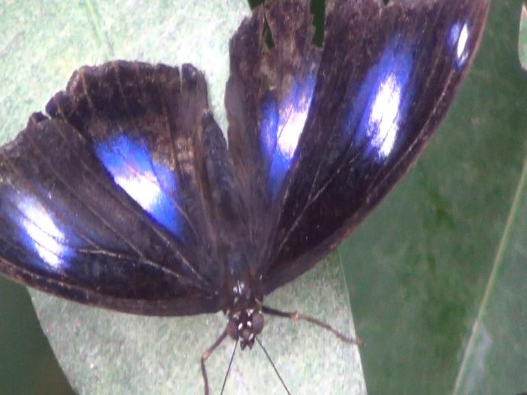 Butterfly House - Sydney