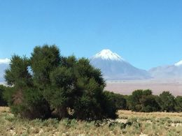 Multiple shots possible of the emblematic Licancabur volcano along the way. Lucky that it got a snow cap during the day and night before! , Patrice d - May 2015