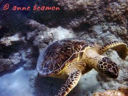 Anne Beamon: Hanauma Bay........Hi, anne beamon - May 2010