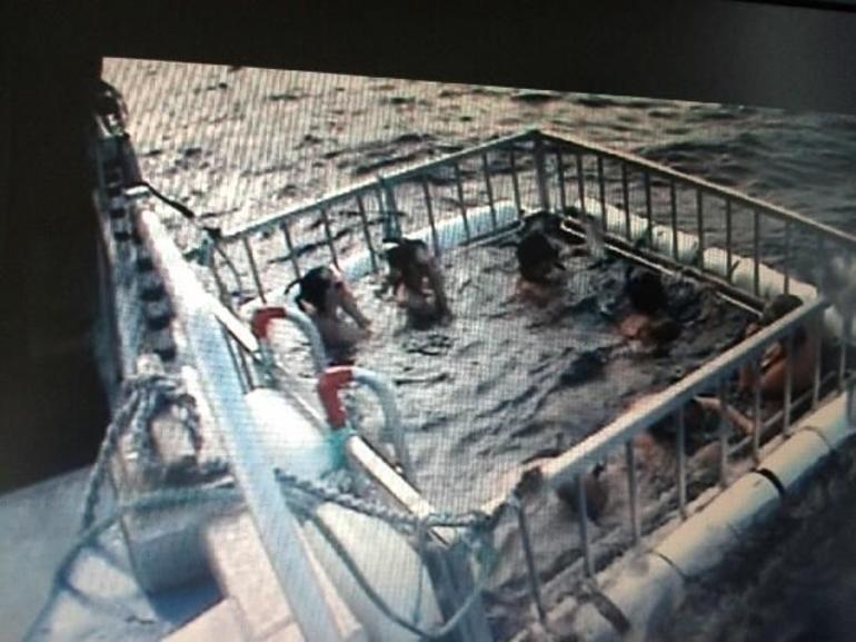 shark cage - Oahu