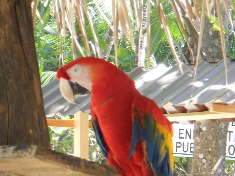 Tortuga Island (11) - Jaco