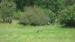 Spotting a kangaroo out on the back roads! , AJM - May 2017