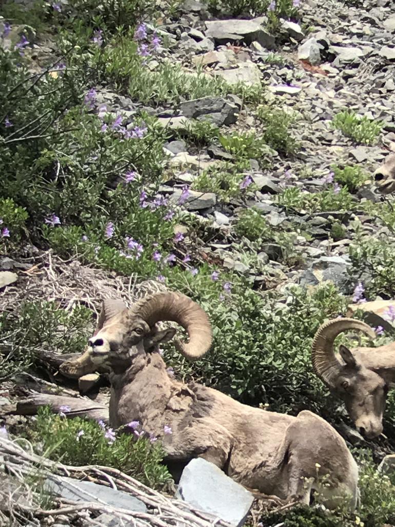 4-Day Yellowstone and Grand Teton National Parks Wildlife Adventure