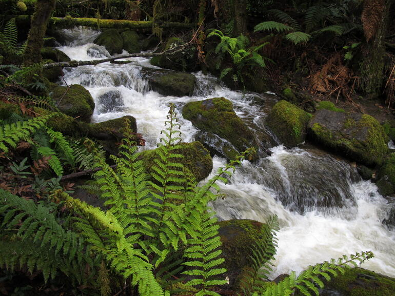 Creek - Tasmania