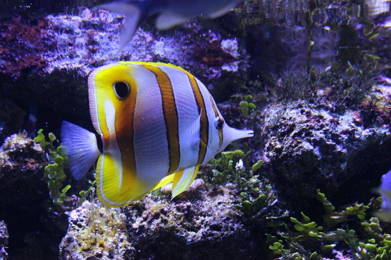 SEA LIFE Sydney Aquarium Entrance Ticket