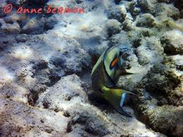 Anne Beamon: Hanauma Bay...........Hi, anne beamon - May 2010