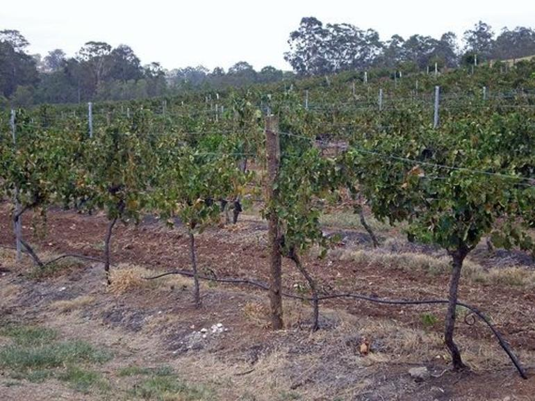 Hunter Valley Wine Tour - Sydney
