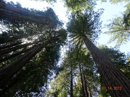 The wonderful sites at Muir Woods , Janet C - July 2013