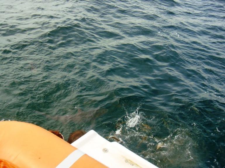 Shark! - Nassau