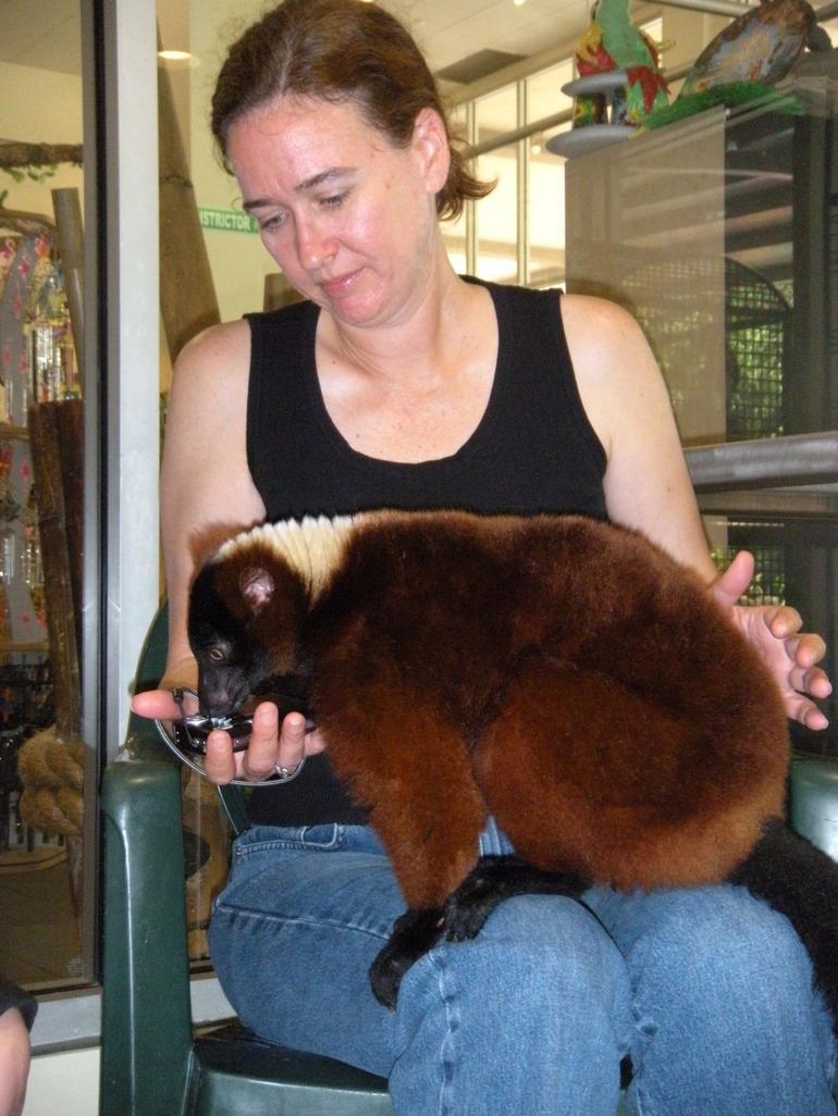 Lemurs on Sue's knees - Miami