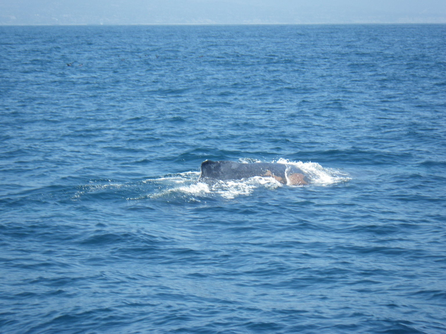 MAIS FOTOS, Whale Watching Excursion in Dana Point