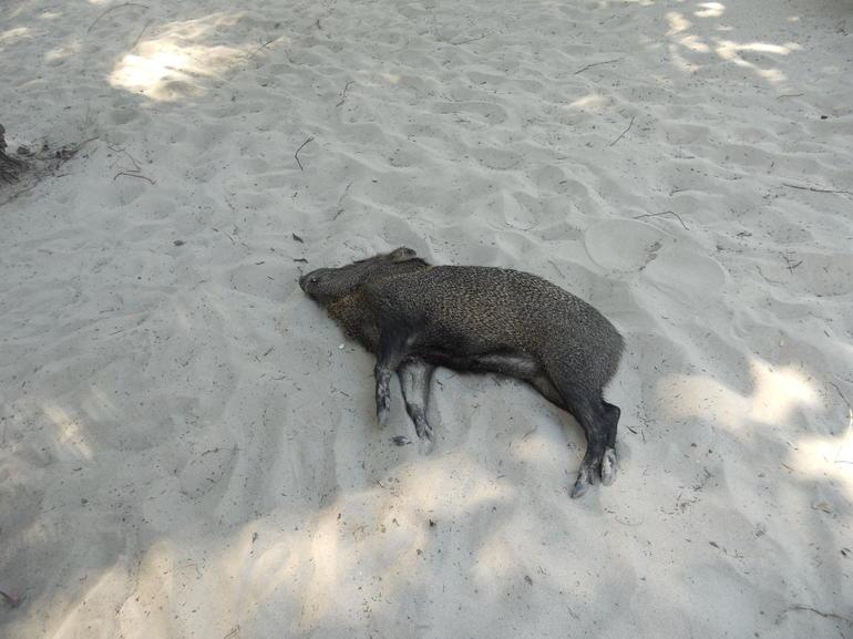 Tortuga Island (27) - Jaco