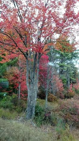 color, and more color , Rodger P - October 2017