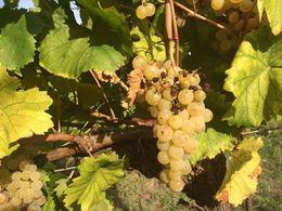 Vinprovningstur i Frascati Rom , Maria S - October 2015