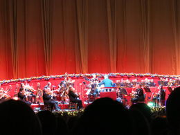 Live orchestra, Patricia P - July 2015