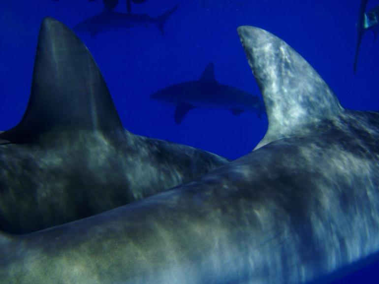 requins-types-mer-plongee